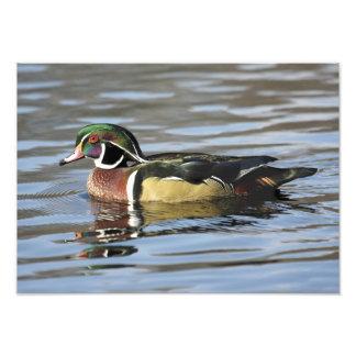 Wood Duck Photograph Print
