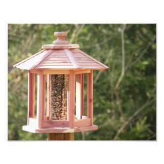 Wooden Backyard Bird Feeder Photograph Print