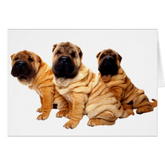 Wrinkles Are Beautiful Greeting Card