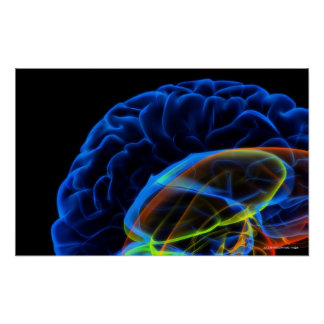X-ray image of the brain poster