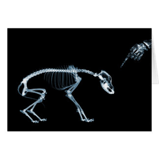 X-Ray Skeletons Bad Dog Blue Greeting Card
