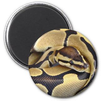 Yellow and Black Ball Python 3 6 Cm Round Magnet