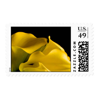 Yellow Calla Lily Event And Wedding Postage Stamp