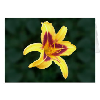 Yellow Daylily Flower with Red, Hemerocallis: Greeting Card