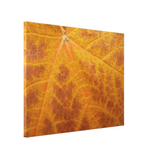 Yellow Maple Leaf Autumn Abstract Nature Stretched Canvas Prints