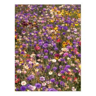 Yellow Wildflowers flowers Postcard