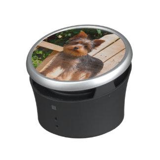 Yorkshire Terrier standing on wooden chair Speaker