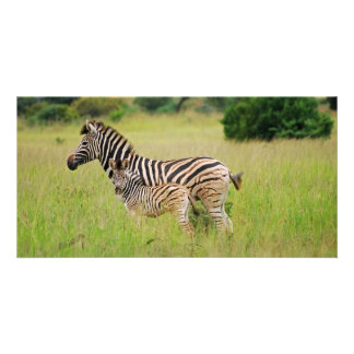 Zebra baby and mom custom photo card