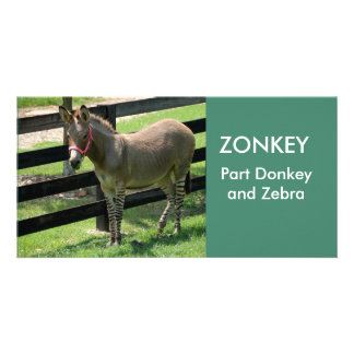 ZONKEY part Donkey and Zebra photocard Photo Cards